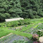 Giardino interno al Monastero