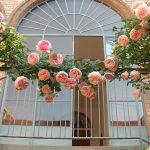 Rose sull'entrata